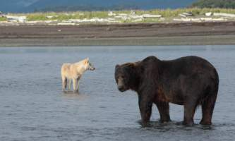 Alaska-Bear-Adventures-with-K-Bay-043-2-omx0mi
