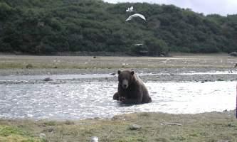 Alaska-Ultimate-Safaris-P9060004-p5lkn1