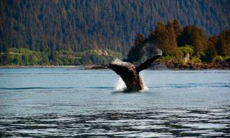 Alaska_Adventure_Sailing-Breach-nzq7qo