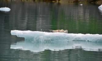 Alaska_Adventure_Sailing-DCH_6719-nzq7sm