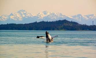 Alaska_Adventure_Sailing-Juneau_whales-nzq7qm
