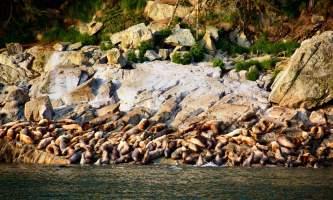 Alaska_Adventure_Sailing-Sea_Lions-nzq7qs