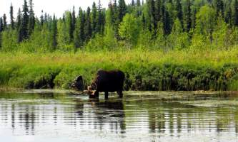 Alaskas-Wilderness-Place-Lodge-DSCN0076edit-o0jxvl