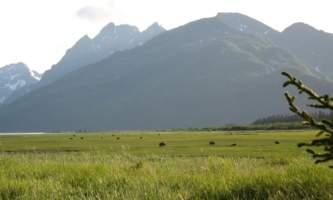 Bear-Camp-IMG_2223-phucsf