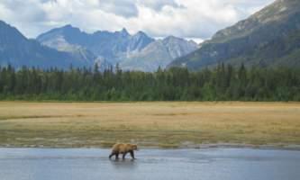 Bear-Camp-IMG_2611-phucso
