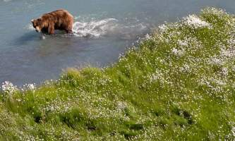 Bear_Viewing_at_Ultima_Thule-2011_06_9_125-oklz49