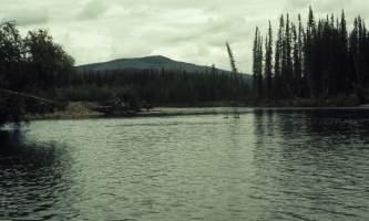 Beaver-02-mj5gi9