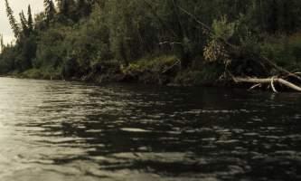 Beaver-05-mj5gir