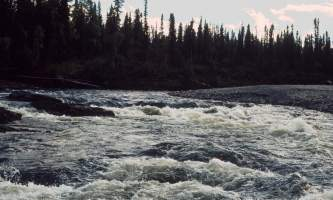 Birch-17-mj5gnv