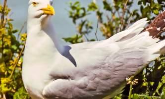 Bird_Species-01-539008006-mryhwc