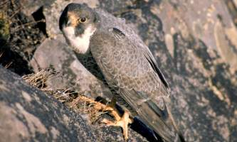 Bird_Species-01-mknjua