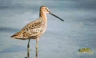 Bird_Species-02-mknjuf