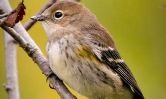 Bird_Species-03-mryhwm