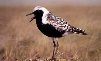 Bird_Species-04-mknjbz