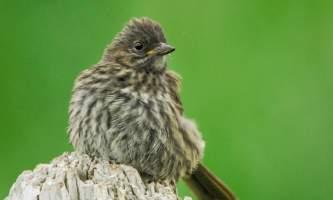 Bird_Species-04-n8iizj