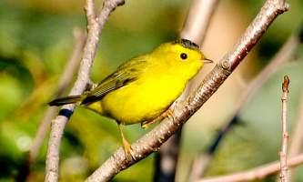 Bird_Species-09-mknjcp