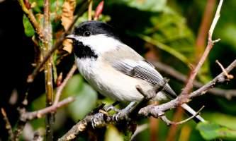 Bird_Species-09-mxq6hc