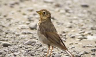 Bird_Species-2-nhvnuq