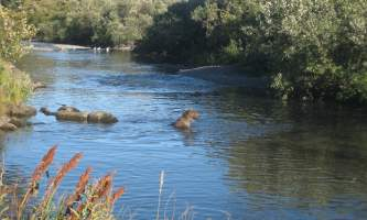 Buskin_State_Recreation_Site-Buskin_State_Recreation_Site_28Bear29-o19upt