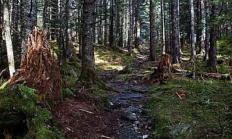 Caines-Head-Coastal-Trail-01-n8vuu0