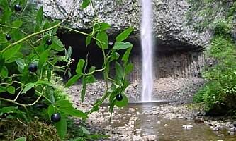 Canoe-Point-Trail-01-mxq4lh