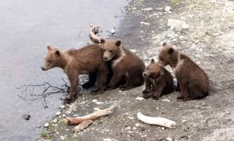 Cubs_times_4-rsz-copyright_Scott_Moran-ma82j3