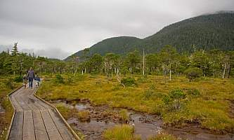 Forest-and-Muskeg-Trail-2-nhvzcl