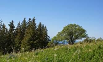 Homestead_Trail-Homestead_Trail_3-nz5x0f