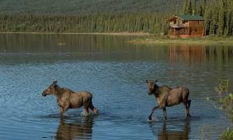 Iniakuk_Lake_Wilderness_Lodge-12-nxxi7e