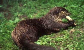 Land_Mammals-16-mknjdz