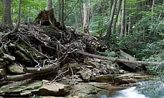 Middle-Fork-Loop-Trail-01-mxq6zc