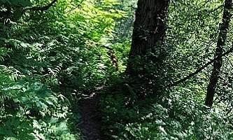 Mount-Juneau-Trail-nhvnyc