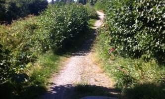 Reber_Trail-photo-nz5y4z