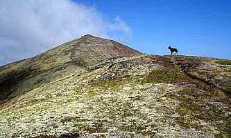 Rendezvous-Peak-Trail-Rendezvous_Peak_Trail-p935t8