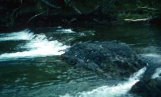 Salmon-10-mj5jpw