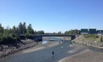 Salmon_Viewing_at_Ship_Creek-05-n8vulr
