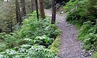 Spaulding-Meadows-Trail-nhvwbv