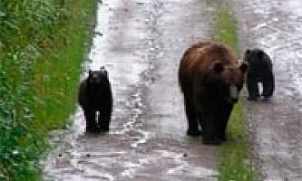 Tenakee-Springs-Trail-nhvwfb