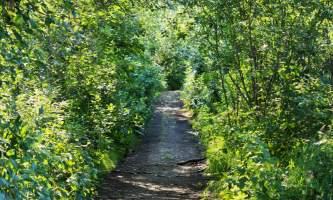 Wagon-Road-Trail-01-n8vozh