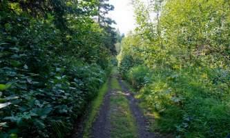 Wagon-Road-Trail-02-n8vozr