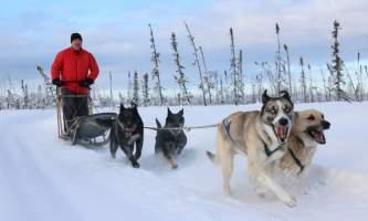 Alaska mushing school img 6633 okpd3q
