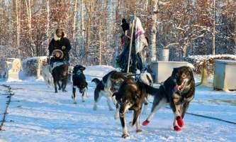Alaska mushing school alaskamushingschool2 ojvw1c