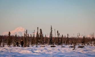 Alaska mushing school alaskamushingschool3 ojzy8f