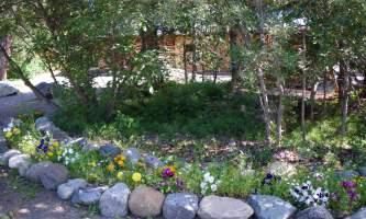 Carlo-creek-lodge-property_foliage-odysnt