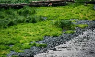 Coldwater alaska water taxi 8 16 06 206 2 pnvfd7
