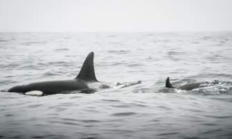 Coldwater alaska water taxi img 3561 3 pnvfcg