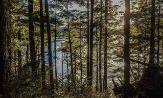 Connell-lake-trail-Connell_Lake_Sun_Through_The_Pines-p5v0pc