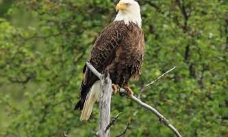 Eagle-river-nature-center-app-with-logos-nhvsua