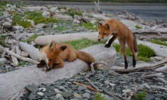 Infinite-alaska-adventures-fox2-p2poy2