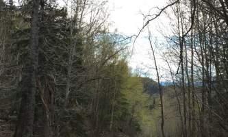 Maud-road-lakes-trail IMG_8336-ov1ntw